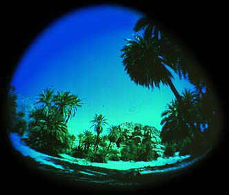 image-martinique-fisheye.jpg (10882 octets)
